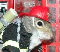Sugar Bush Squirrel helps Rescue Workers after London Terrorists attack July 7, 2005