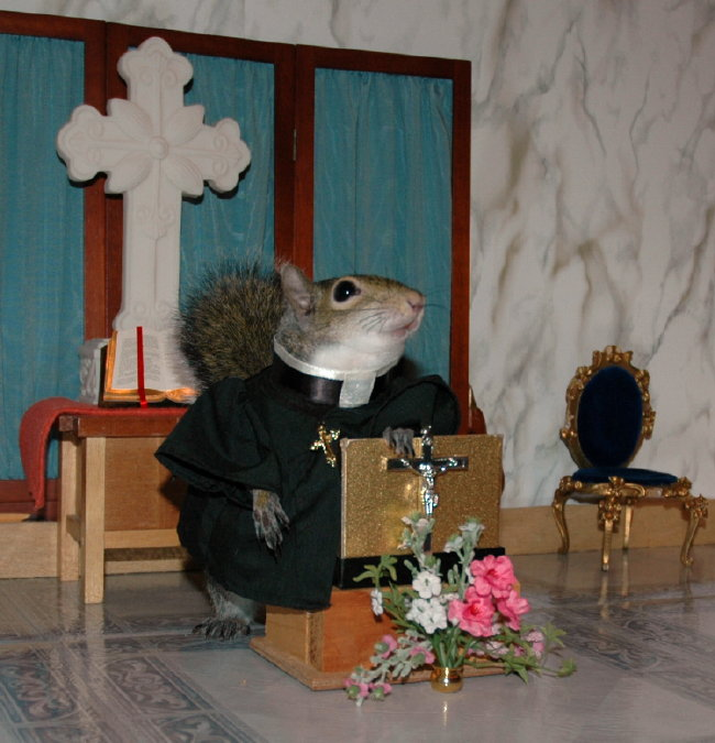Sugar Bush Squirrel delivers her sermon