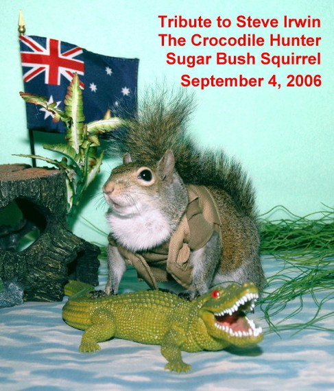 Sugar Bush Squirrel's Tribute to Steve Irwin The Crocodile Hunter