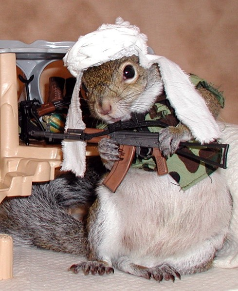Sugar Bush Squirrel has been undercover searching for Osama bin Laden for years