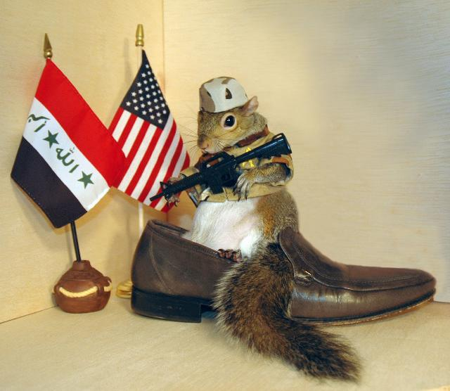 FUNNIES  SQUIRRELS  HOUSES DECORATED WITH US FLAGS