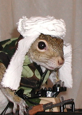 SQUIRREL SOLDIERS