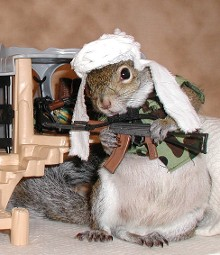 sugar bush squirrel undercover in Afghanistan searching for osama