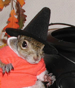 Sugar Bush Squirrel in Halloween Costume