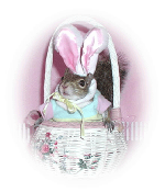 Sugar Bush Squirrel in Bunny Costume