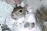 Sugar Bush Squirrel in Valentine Costume
