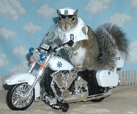 sugar bush squirrel - motorcycle police cop