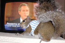 sugar bush squirrel watches president bush on television