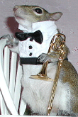 Sugar Bush Squirrel - Trombone Solo