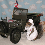 Sugar Bush Squirrel as Red Cross Nurse